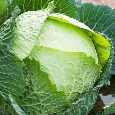 Ăn quá nhiều bắp cải dễ bị bướu cổ