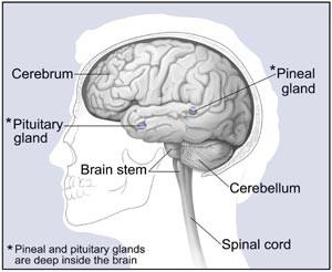Bệnh u não có thể chữa khỏi