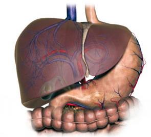 Chức năng gan - các bệnh thường gặp - phòng ngừa bệnh gan